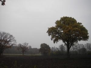 Schleswiger Landschaft