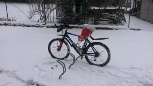 Schneeziege