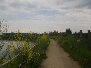 Radweg von Pellestrina nach Norden