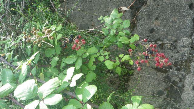 und nasche von den heimischen Früchten